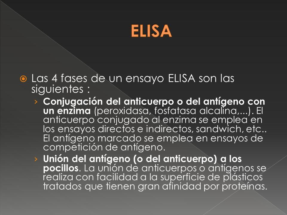 Las 4 fases de un ensayo ELISA son las siguientes : Conjugación del anticuerpo o del antígeno con un enzima (peroxidasa, fosfatasa alcalina,...). El a