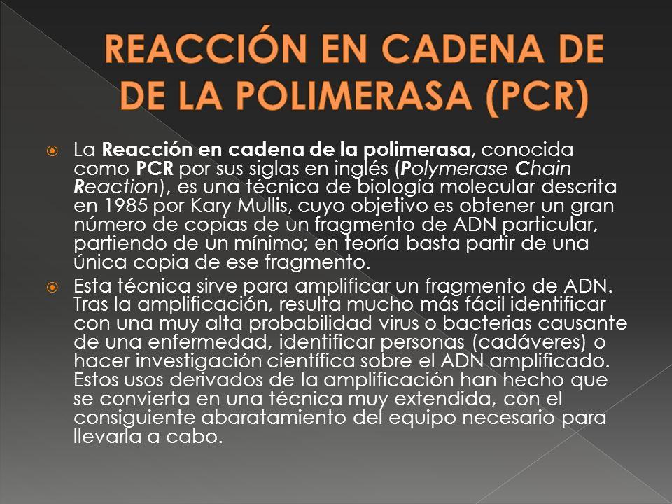 La Reacción en cadena de la polimerasa, conocida como PCR por sus siglas en inglés ( P olymerase C hain R eaction), es una técnica de biología molecul