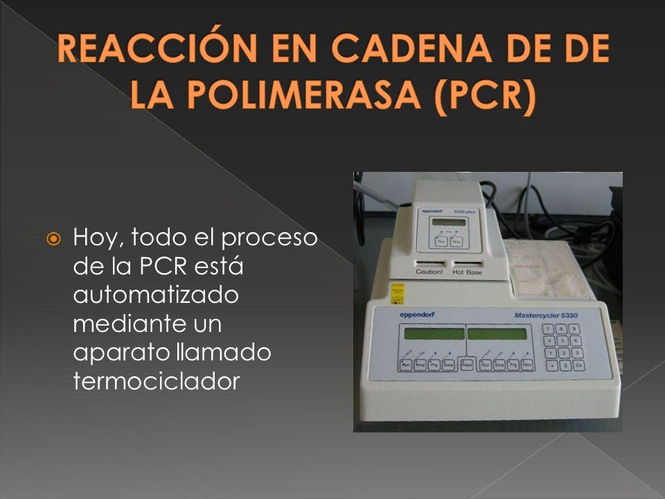 Hoy, todo el proceso de la PCR está automatizado mediante un aparato llamado termociclador