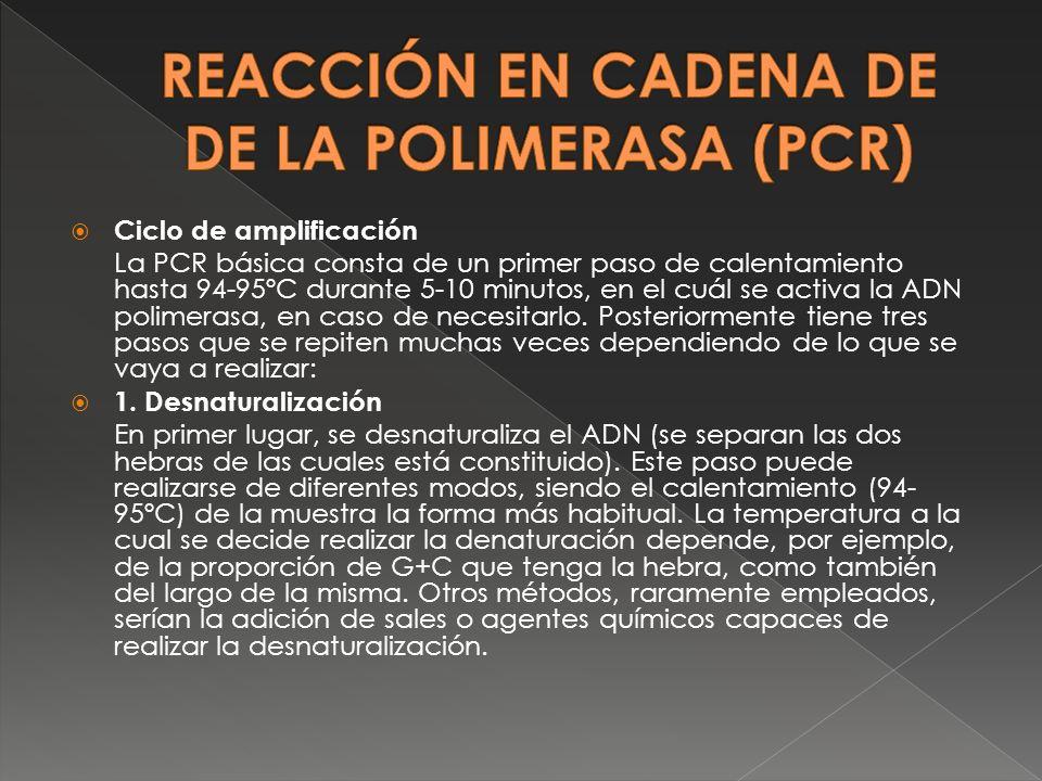 Ciclo de amplificación La PCR básica consta de un primer paso de calentamiento hasta 94-95ºC durante 5-10 minutos, en el cuál se activa la ADN polimer