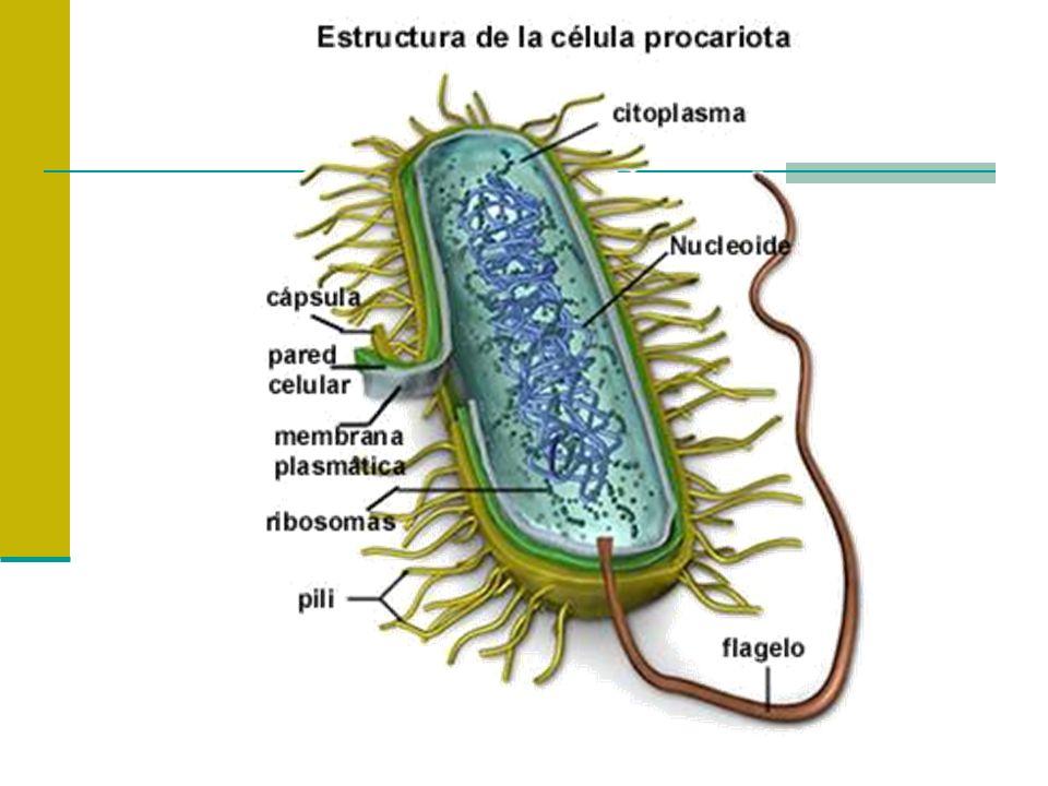 Nutrientes Condiciones necesarias para el desarrollo microbiano: Substancias que la célula toma del ambiente que estimula su crecimiento y que las utiliza en las reacciones catabólicas y anabólicas Características: Atravesar las barreras celulares Ser utilizado por enzimas celulares Proveer energía Proveer subunidades de las macromoléculas