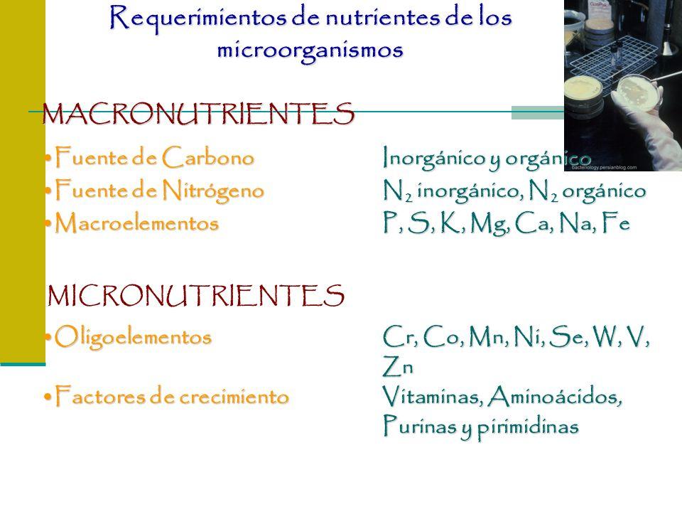 Requerimientos de nutrientes de los microorganismos Fuente de CarbonoInorgánico y orgánicoFuente de CarbonoInorgánico y orgánico Fuente de NitrógenoN