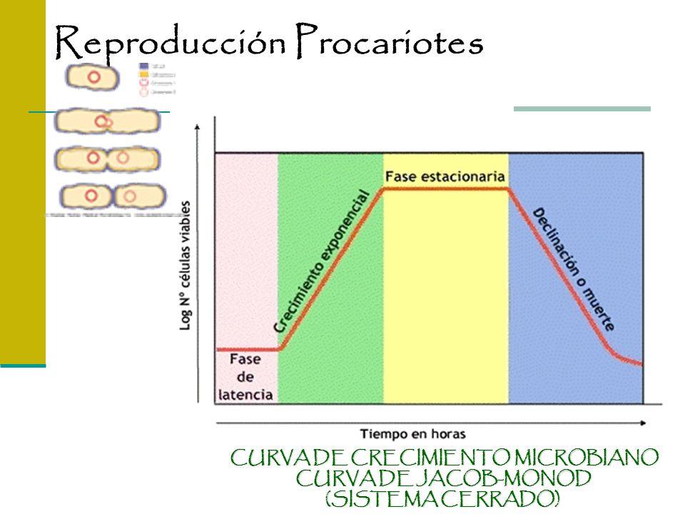 CURVA DE CRECIMIENTO MICROBIANO CURVA DE JACOB-MONOD (SISTEMA CERRADO) Reproducción Procariotes