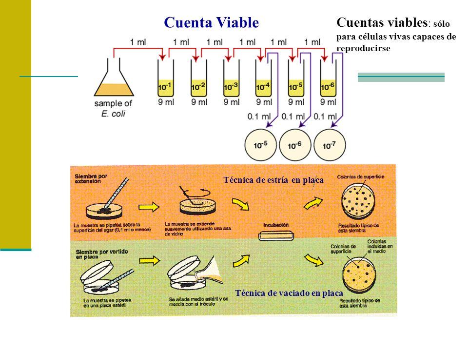 Cuentas viables : sólo para células vivas capaces de reproducirse Cuenta Viable Técnica de vaciado en placa Técnica de estría en placa