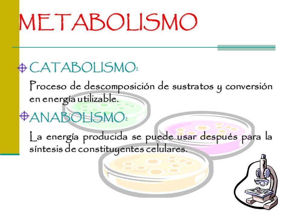 METABOLISMO CATABOLISMO: Proceso de descomposición de sustratos y conversión en energía utilizable. ANABOLISMO: La energía producida se puede usar des