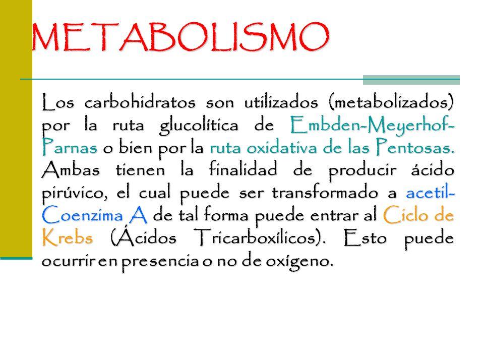 METABOLISMO Los carbohidratos son utilizados (metabolizados) por la ruta glucolítica de Embden-Meyerhof- Parnas o bien por la ruta oxidativa de las Pe