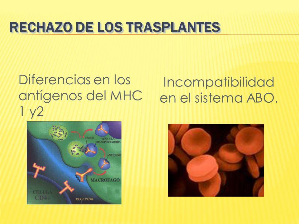 RECHAZO DE LOS TRASPLANTES Diferencias en los antígenos del MHC 1 y2 Incompatibilidad en el sistema ABO.