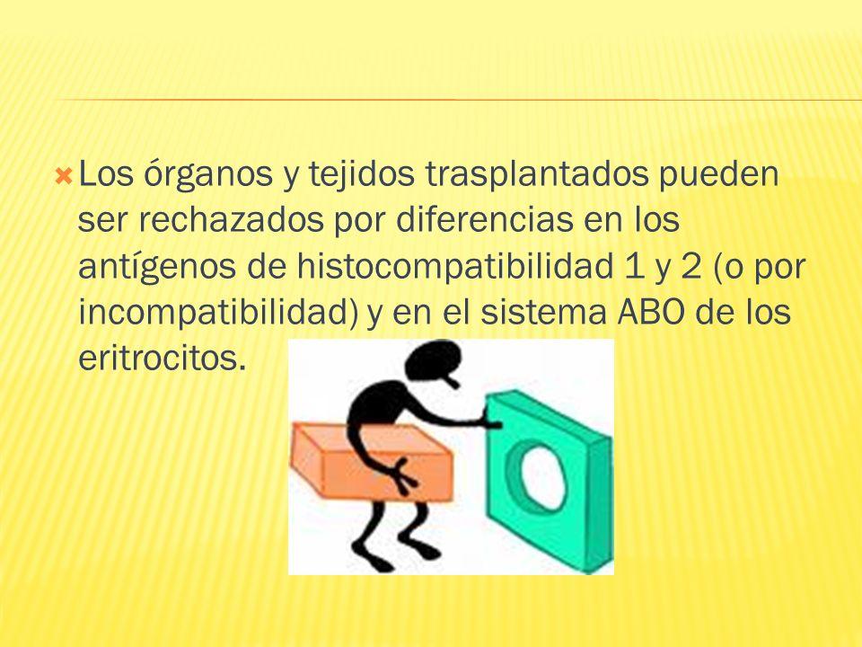 Los órganos y tejidos trasplantados pueden ser rechazados por diferencias en los antígenos de histocompatibilidad 1 y 2 (o por incompatibilidad) y en