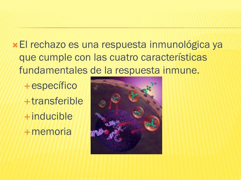 El rechazo es una respuesta inmunológica ya que cumple con las cuatro características fundamentales de la respuesta inmune. específico transferible in