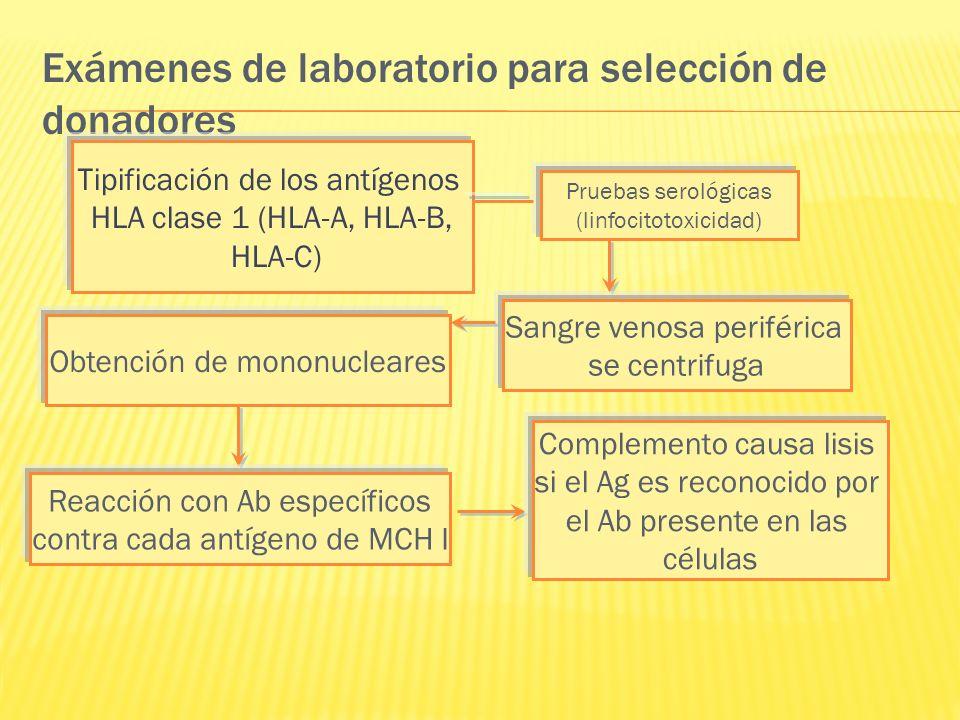 Exámenes de laboratorio para selección de donadores Pruebas serológicas (linfocitotoxicidad) Tipificación de los antígenos HLA clase 1 (HLA-A, HLA-B,