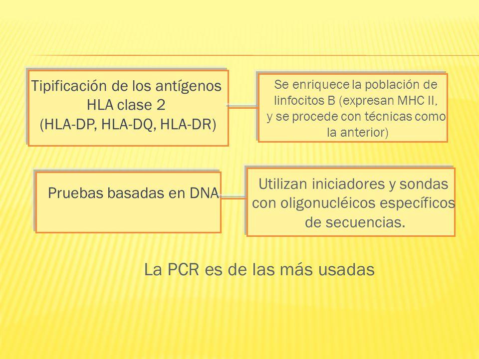 La PCR es de las más usadas Tipificación de los antígenos HLA clase 2 (HLA-DP, HLA-DQ, HLA-DR) Se enriquece la población de linfocitos B (expresan MHC