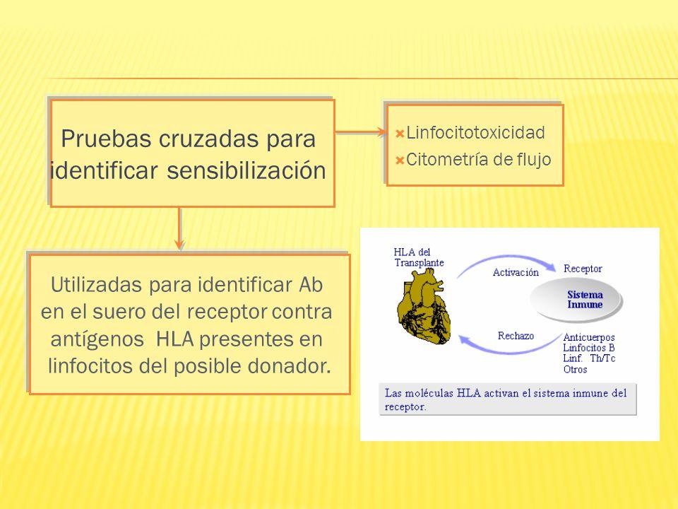 Pruebas cruzadas para identificar sensibilización Utilizadas para identificar Ab en el suero del receptor contra antígenos HLA presentes en linfocitos