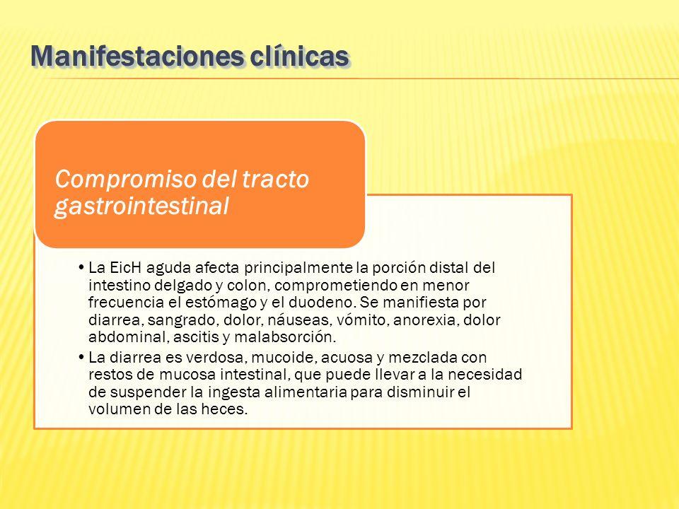 La EicH aguda afecta principalmente la porción distal del intestino delgado y colon, comprometiendo en menor frecuencia el estómago y el duodeno. Se m