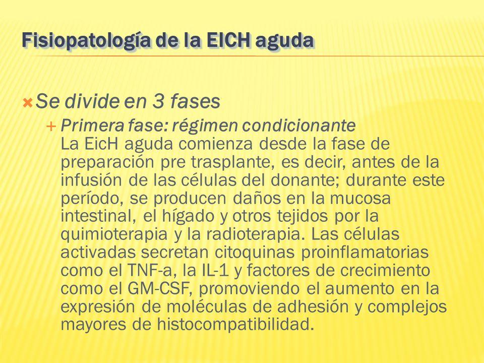 Se divide en 3 fases Primera fase: régimen condicionante La EicH aguda comienza desde la fase de preparación pre trasplante, es decir, antes de la inf