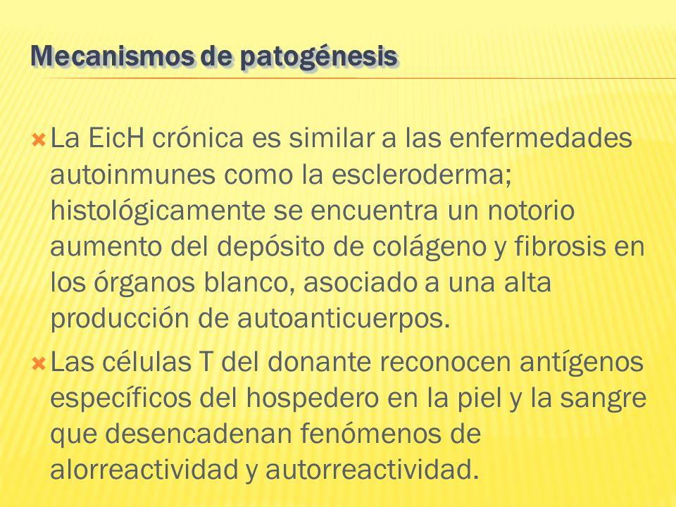 La EicH crónica es similar a las enfermedades autoinmunes como la escleroderma; histológicamente se encuentra un notorio aumento del depósito de colág
