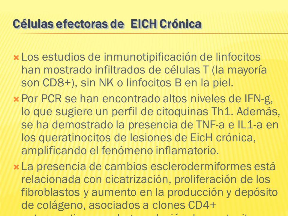 Los estudios de inmunotipificación de linfocitos han mostrado infiltrados de células T (la mayoría son CD8+), sin NK o linfocitos B en la piel. Por PC