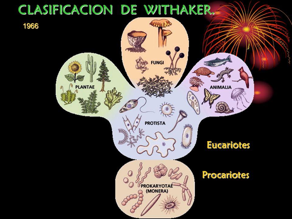CLASIFICACION DE WITHAKER. 1966 Procariotes Eucariotes