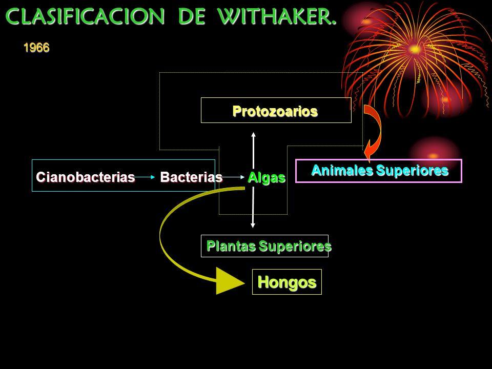 Cianobacterias Bacterias Algas Plantas Superiores Protozoarios Protozoarios Animales Superiores Animales Superiores Hongos 1966