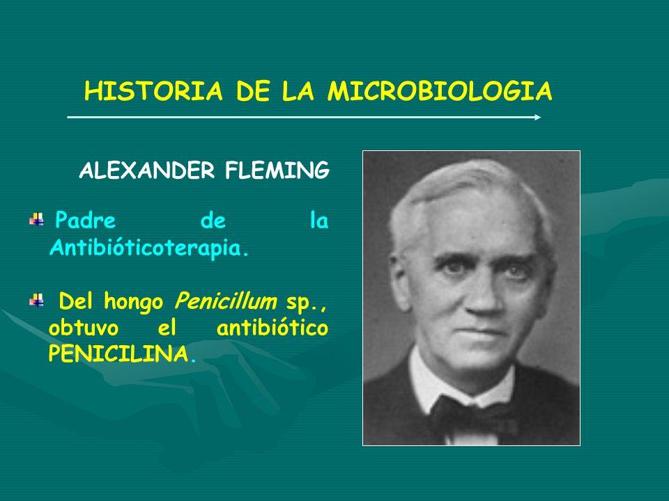HISTORIA DE LA MICROBIOLOGIA ALEXANDER FLEMING Padre de la Antibióticoterapia. Del hongo Penicillum sp., obtuvo el antibiótico PENICILINA.