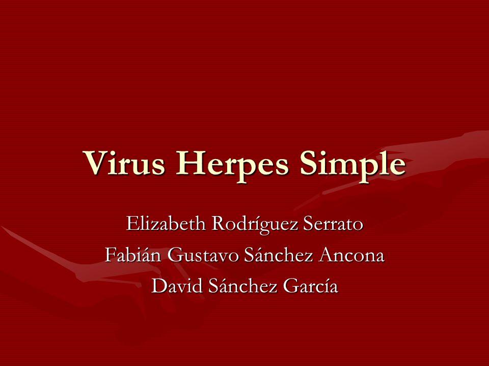 Virus Herpes Simple Elizabeth Rodríguez Serrato Fabián Gustavo Sánchez Ancona David Sánchez García
