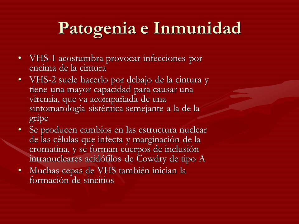 Patogenia e Inmunidad VHS-1 acostumbra provocar infecciones por encima de la cinturaVHS-1 acostumbra provocar infecciones por encima de la cintura VHS