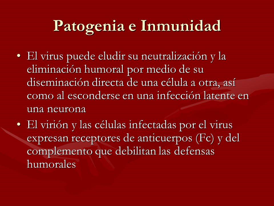 Patogenia e Inmunidad El virus puede eludir su neutralización y la eliminación humoral por medio de su diseminación directa de una célula a otra, así