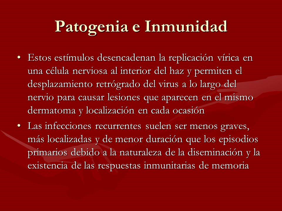 Patogenia e Inmunidad Estos estímulos desencadenan la replicación vírica en una célula nerviosa al interior del haz y permiten el desplazamiento retró