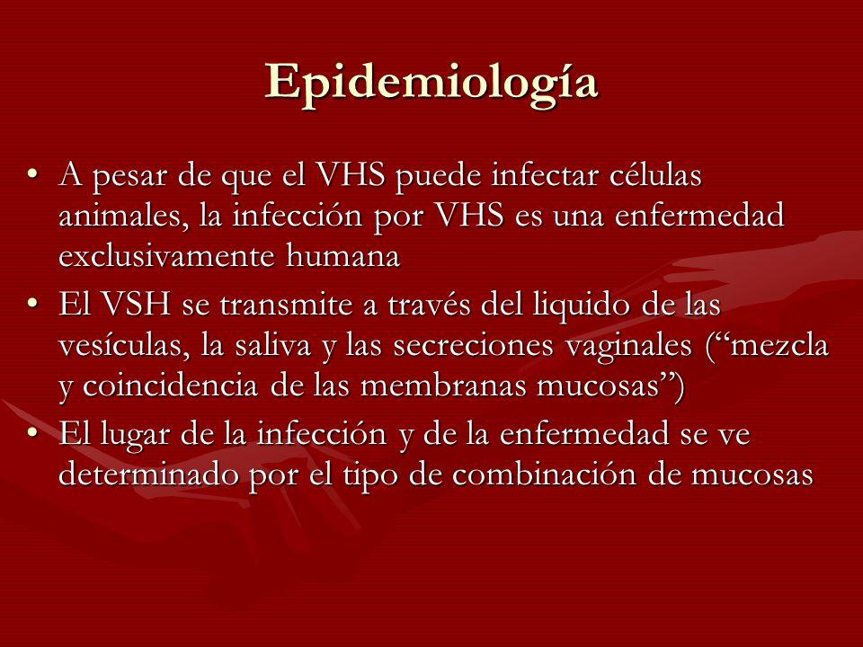 Epidemiología A pesar de que el VHS puede infectar células animales, la infección por VHS es una enfermedad exclusivamente humanaA pesar de que el VHS