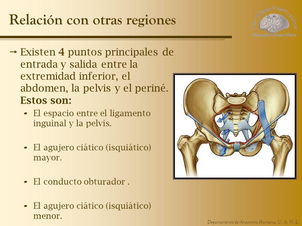 Departamento de Anatomía Humana, U. A. N. L. Relación con otras regiones Existen 4 puntos principales de entrada y salida entre la extremidad inferior