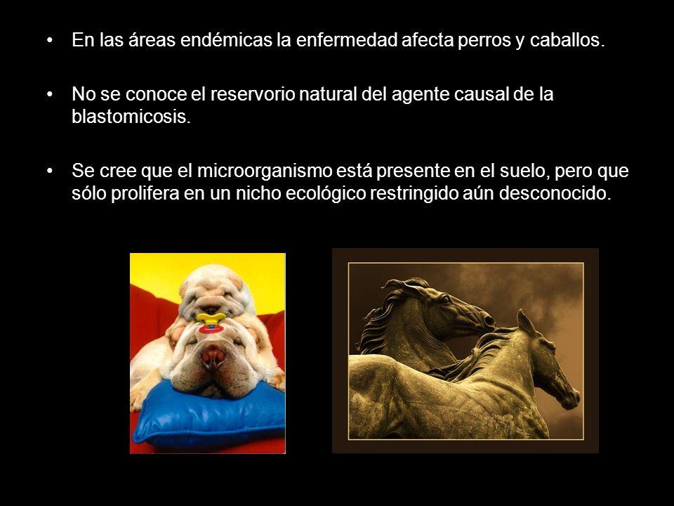 En las áreas endémicas la enfermedad afecta perros y caballos. No se conoce el reservorio natural del agente causal de la blastomicosis. Se cree que e