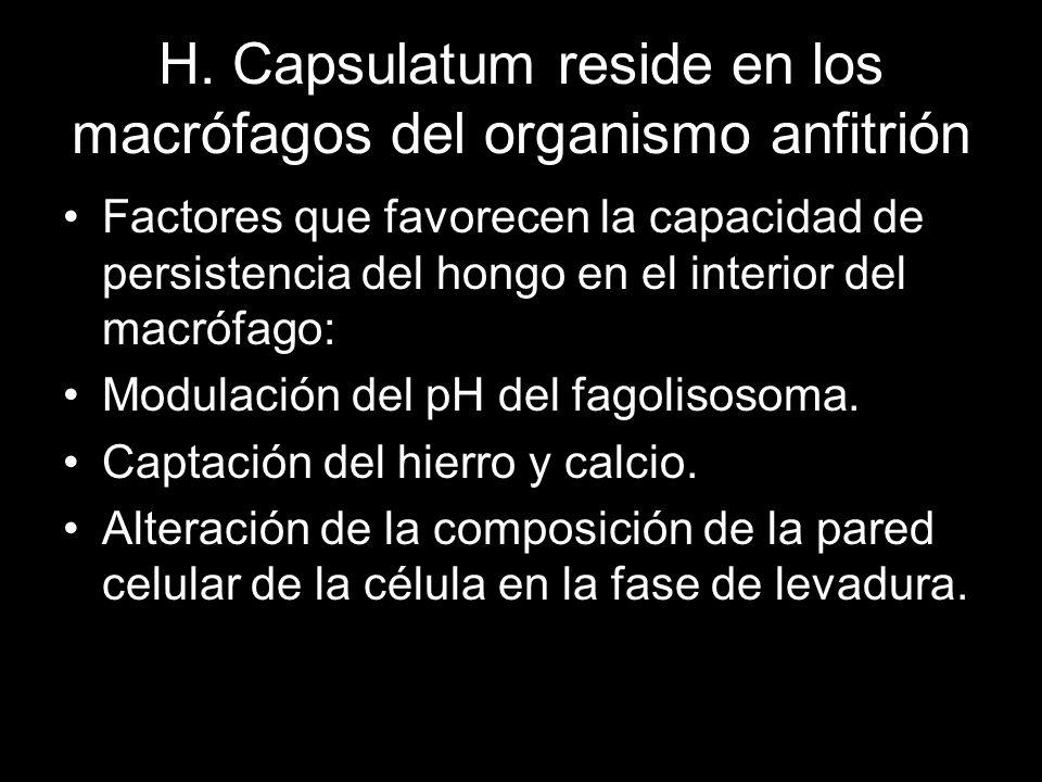 H. Capsulatum reside en los macrófagos del organismo anfitrión Factores que favorecen la capacidad de persistencia del hongo en el interior del macróf