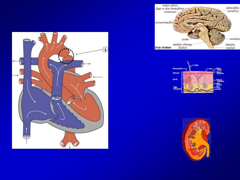 Insuficiencia cardíaca izquierda: Anterógrada: (hipoflujo tisular) Cutáneo (frialdad) renal (oliguría) cerebral (trastorno del sensorio) IC izquierda Retrógrada: disnea rales crepitantes