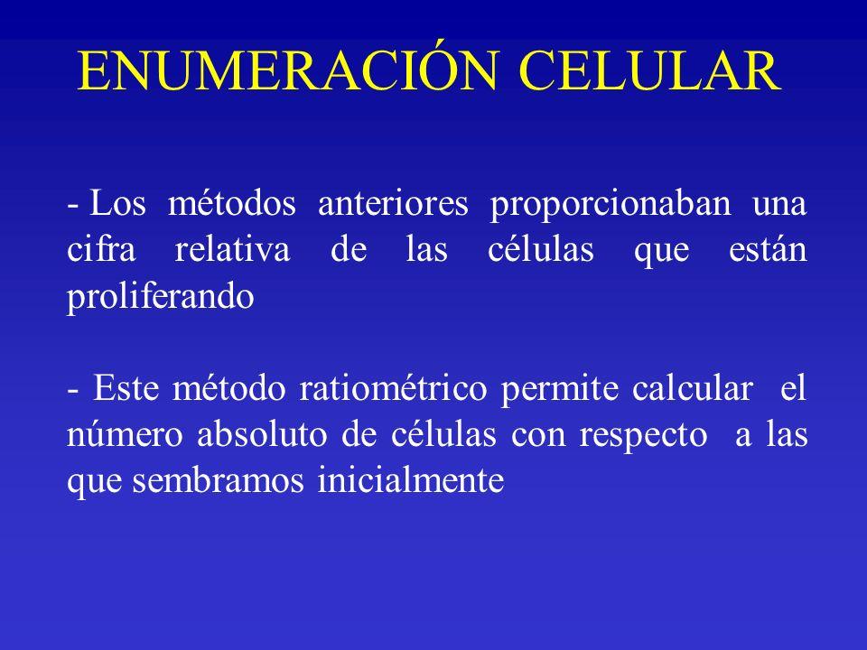 ENUMERACIÓN CELULAR - Los métodos anteriores proporcionaban una cifra relativa de las células que están proliferando - Este método ratiométrico permit