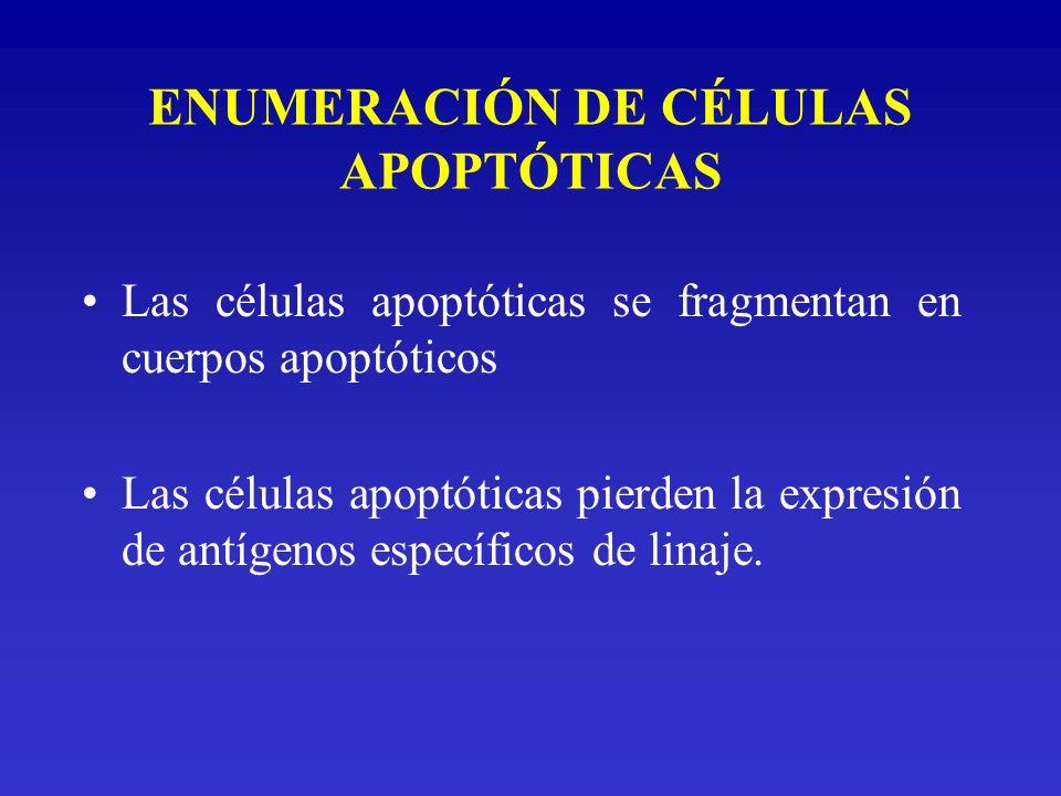 ENUMERACIÓN DE CÉLULAS APOPTÓTICAS Las células apoptóticas se fragmentan en cuerpos apoptóticos Las células apoptóticas pierden la expresión de antíge