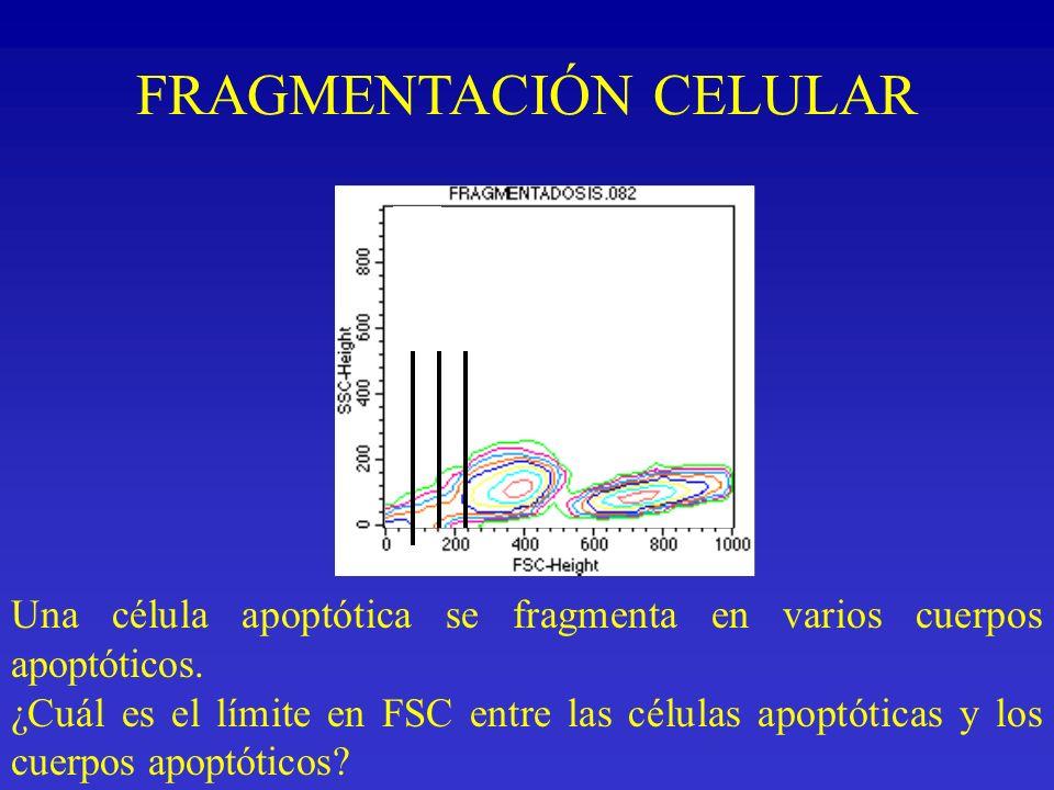 FRAGMENTACIÓN CELULAR Una célula apoptótica se fragmenta en varios cuerpos apoptóticos. ¿Cuál es el límite en FSC entre las células apoptóticas y los