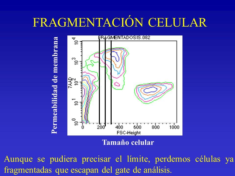 FRAGMENTACIÓN CELULAR Aunque se pudiera precisar el límite, perdemos células ya fragmentadas que escapan del gate de análisis. Permeabilidad de membra