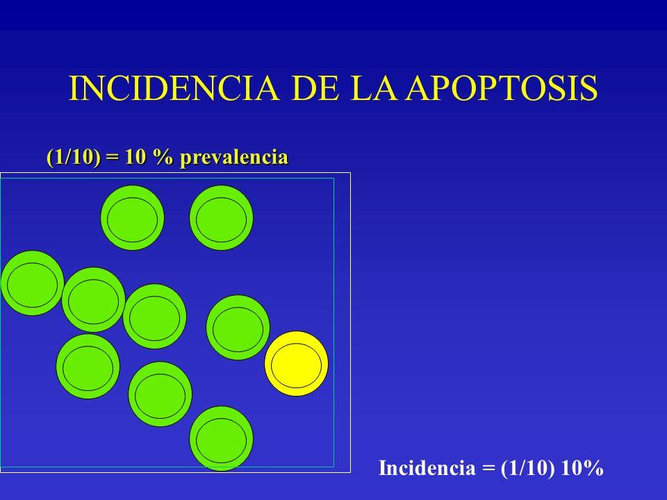 INCIDENCIA DE LA APOPTOSIS (1/10) = 10 % prevalencia Incidencia = (1/10) 10%
