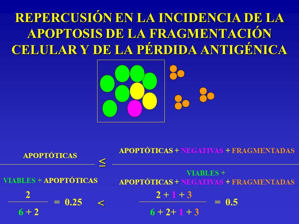REPERCUSIÓN EN LA INCIDENCIA DE LA APOPTOSIS DE LA FRAGMENTACIÓN CELULAR Y DE LA PÉRDIDA ANTIGÉNICA APOPTÓTICAS VIABLES + APOPTÓTICAS APOPTÓTICAS + NE
