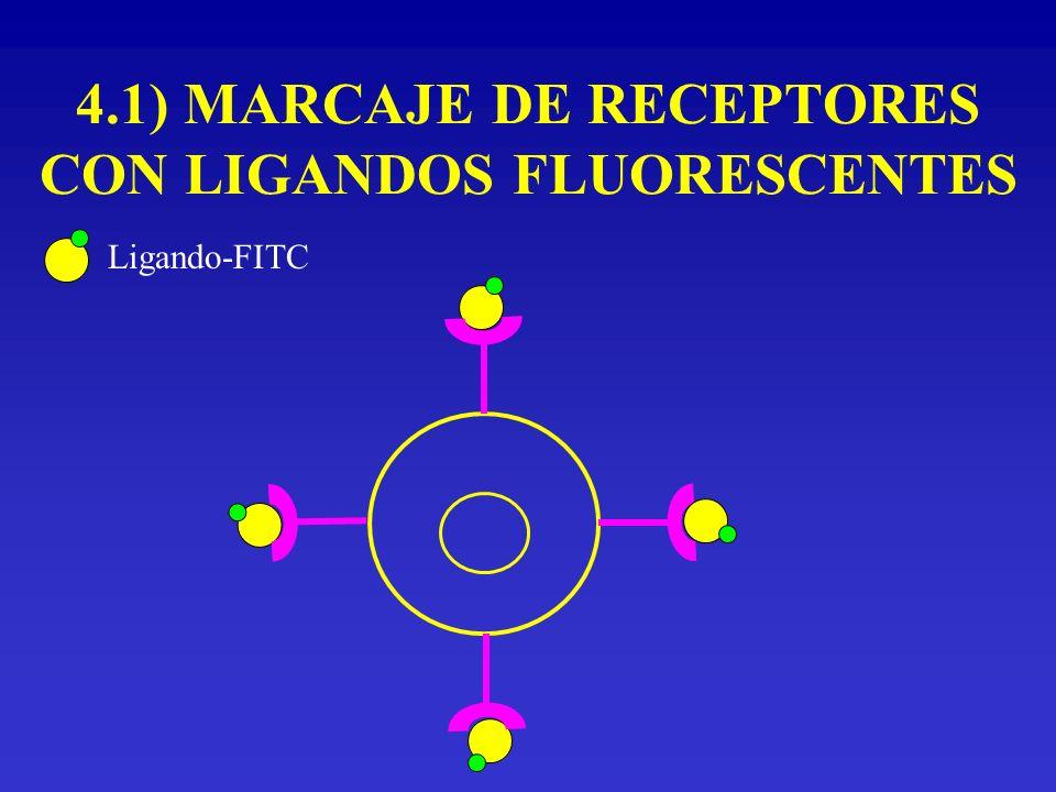 4.1) MARCAJE DE RECEPTORES CON LIGANDOS FLUORESCENTES Ligando-FITC