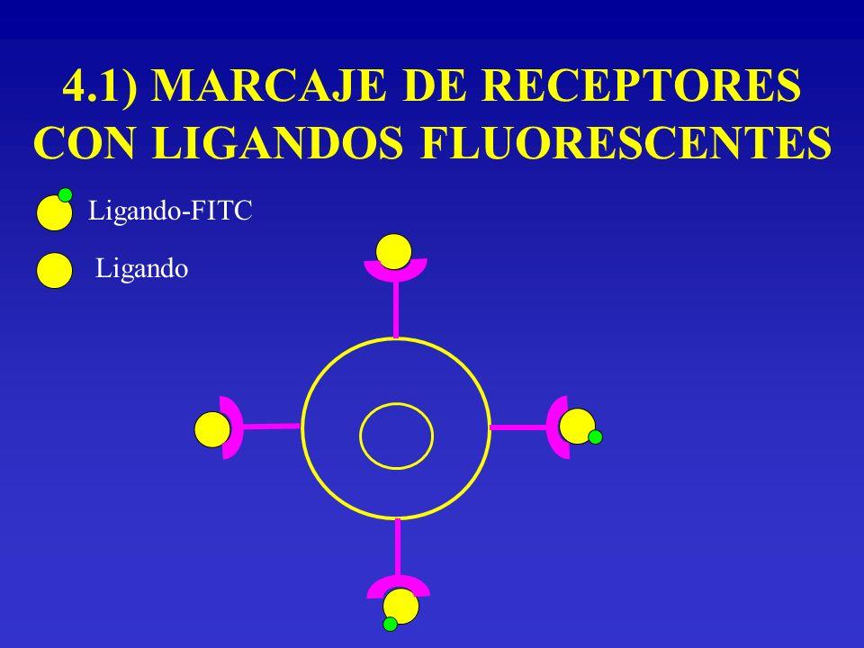 4.1) MARCAJE DE RECEPTORES CON LIGANDOS FLUORESCENTES Ligando-FITC Ligando