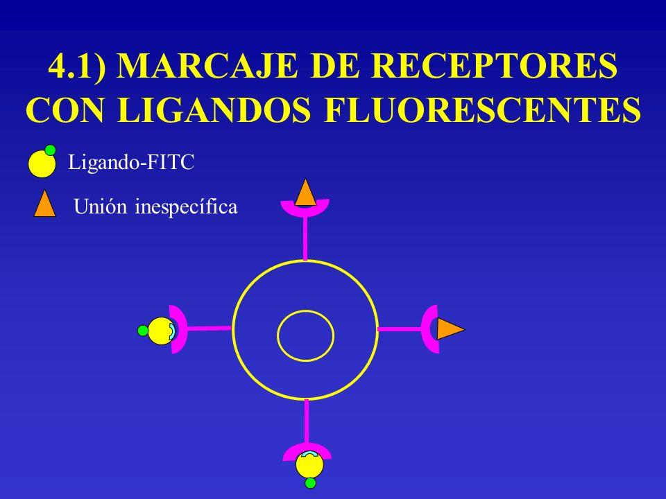 4.1) MARCAJE DE RECEPTORES CON LIGANDOS FLUORESCENTES Ligando-FITC Unión inespecífica