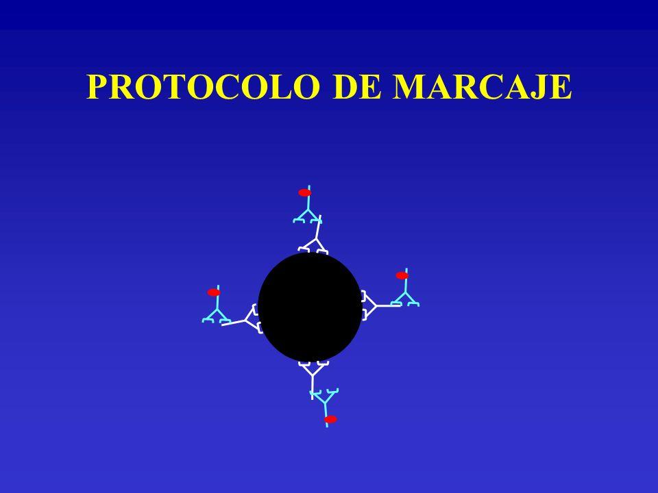 CÁLCULO DE LA DENSIDAD ANTIGÉNICA POR CÉLULA La capacidad de unión específica (ABC específica o neta) es igual a la cantidad de moléculas antigénicas expresadas por cada célula.