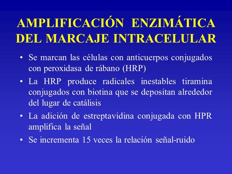 AMPLIFICACIÓN ENZIMÁTICA DEL MARCAJE INTRACELULAR Se marcan las células con anticuerpos conjugados con peroxidasa de rábano (HRP) La HRP produce radic