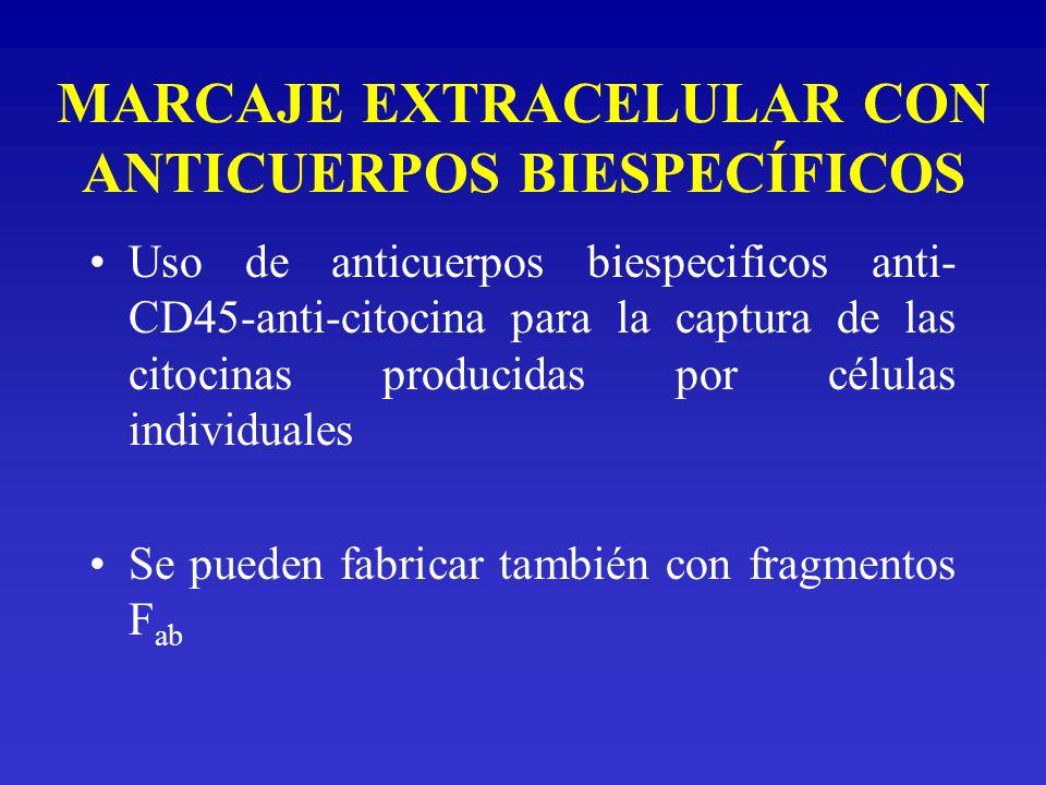 MARCAJE EXTRACELULAR CON ANTICUERPOS BIESPECÍFICOS Uso de anticuerpos biespecificos anti- CD45-anti-citocina para la captura de las citocinas producid