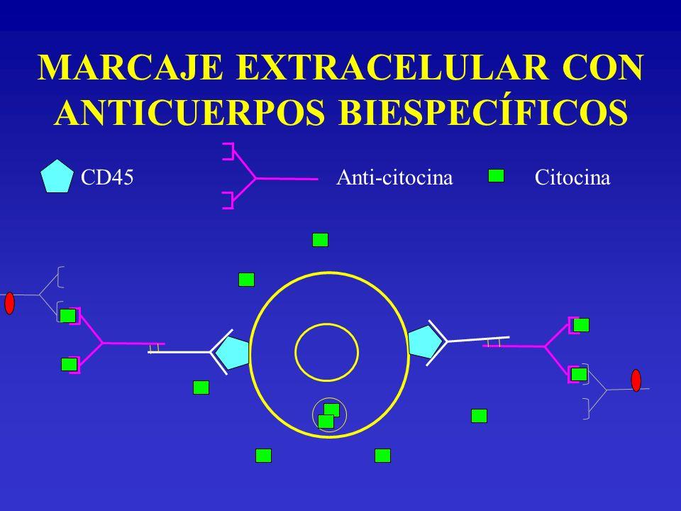 MARCAJE EXTRACELULAR CON ANTICUERPOS BIESPECÍFICOS CD45Anti-citocinaCitocina