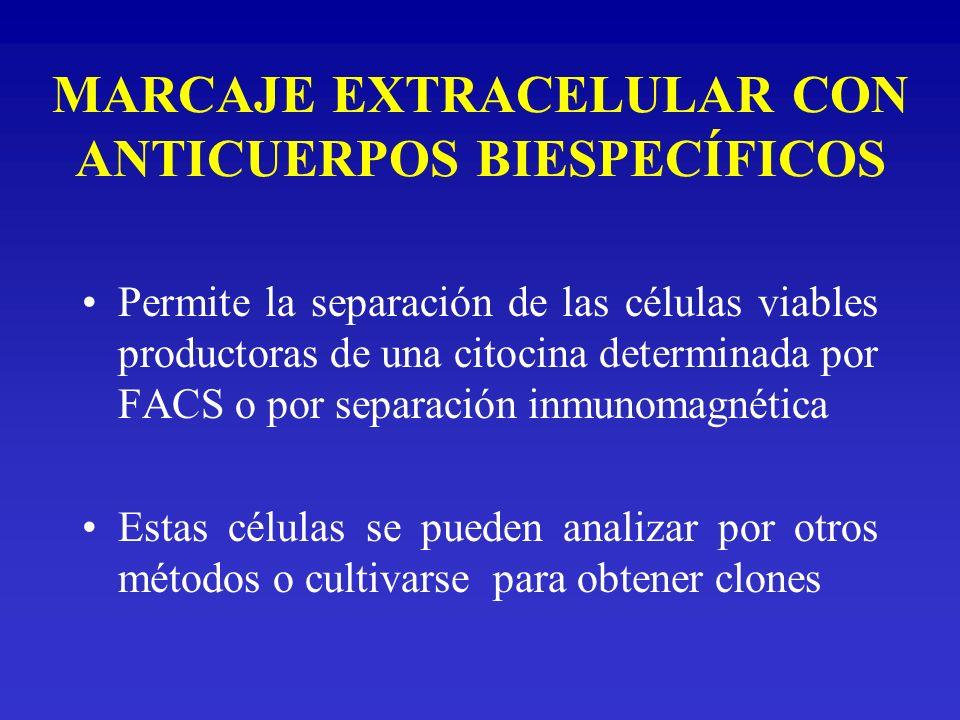 MARCAJE EXTRACELULAR CON ANTICUERPOS BIESPECÍFICOS Permite la separación de las células viables productoras de una citocina determinada por FACS o por