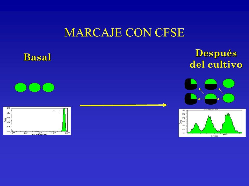 Después del cultivo Basal MARCAJE CON CFSE