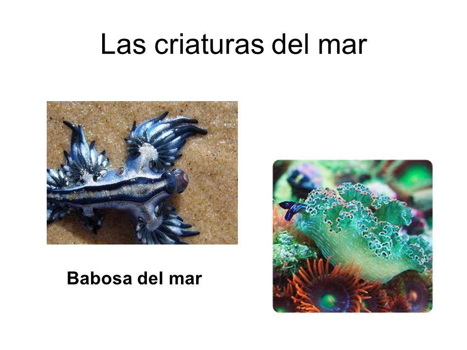 Las criaturas del mar Babosa del mar