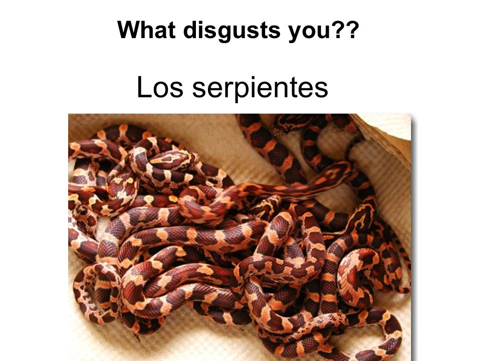 Los serpientes What disgusts you??