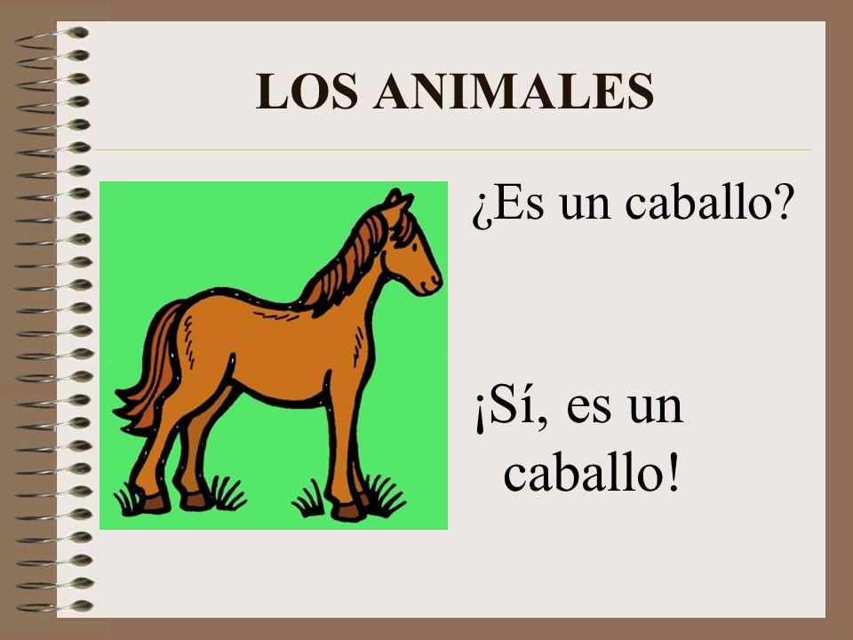 LOS ANIMALES ¡Es un perro! ¿Es un gato? ¡No! ¿Qué es?